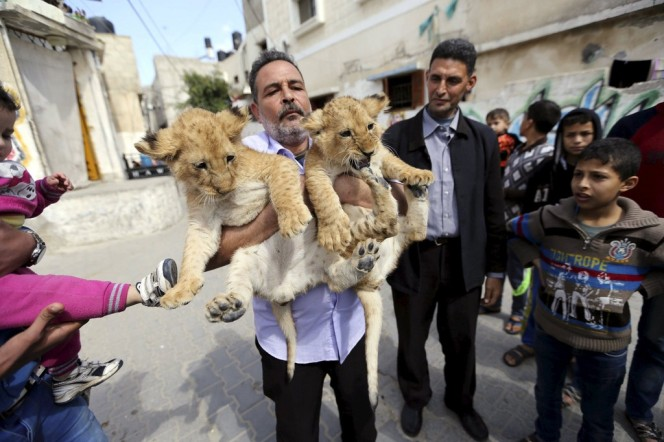 Photo of the Week: Lions ofCanaan
